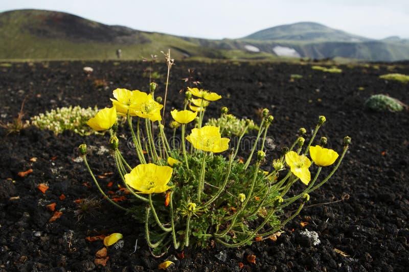 Blumen im Berg stockfoto