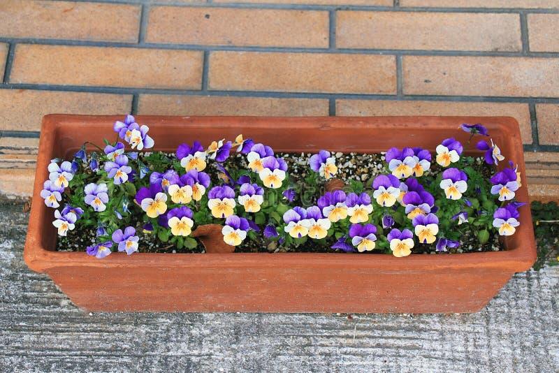 Blumen im Betriebspotentiometer stockfotos