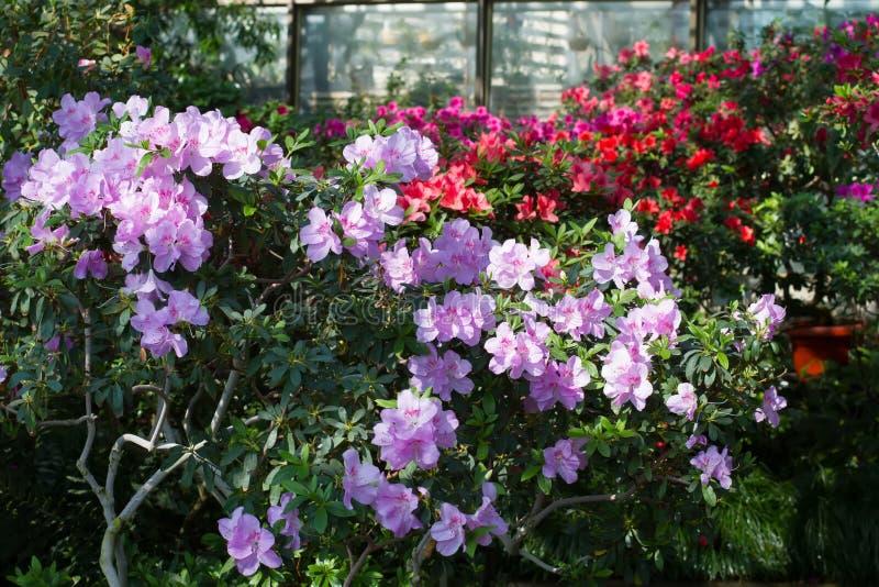 Blumen im botanischen Garten stockfoto