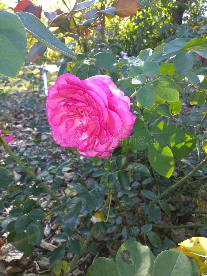 Blumen im Fall lizenzfreie stockfotos