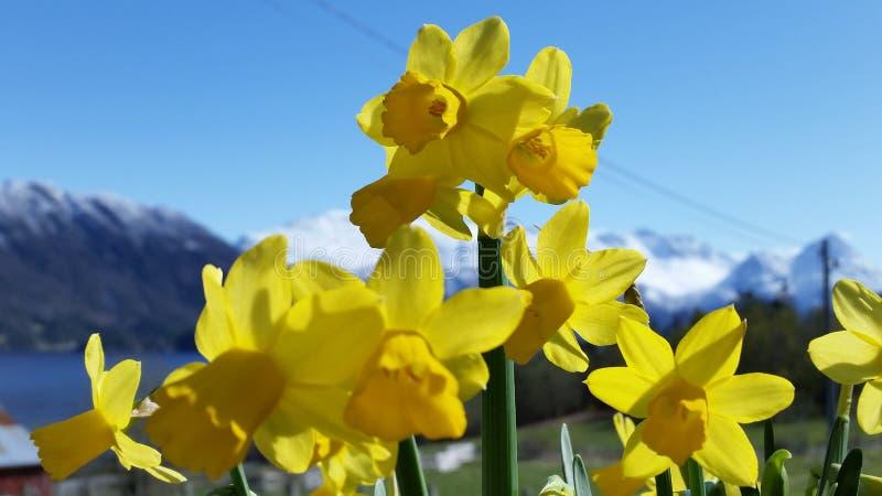 Blumen im Fokus stockbild