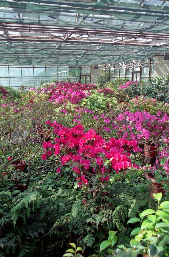 Blumen im Gewächshaus lizenzfreie stockbilder
