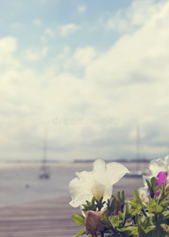 Blumen im Hafen lizenzfreies stockfoto