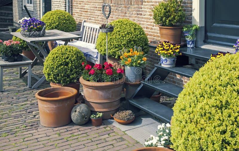 Blumen im Hausgarten lizenzfreies stockfoto