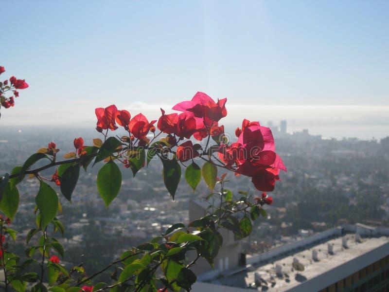 Blumen im Himmel stockfotos