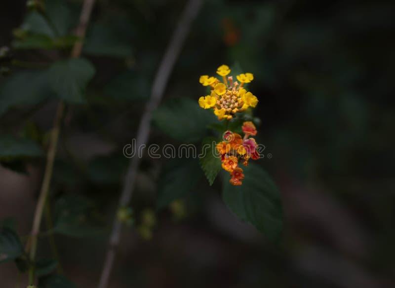 Blumen im Holz stockbild
