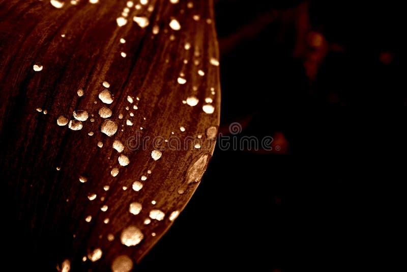 Download Blumen im Regen stockfoto. Bild von tulpen, nave, regen - 43614