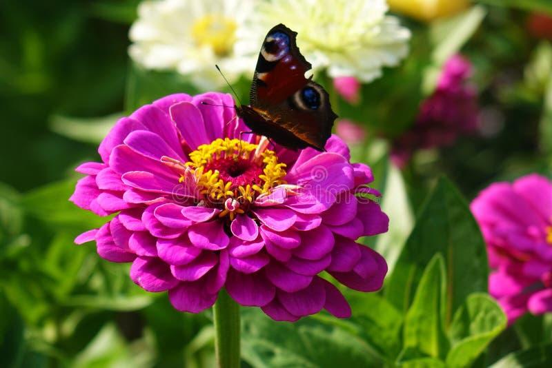 Blumen im Sommergarten lizenzfreie stockfotografie