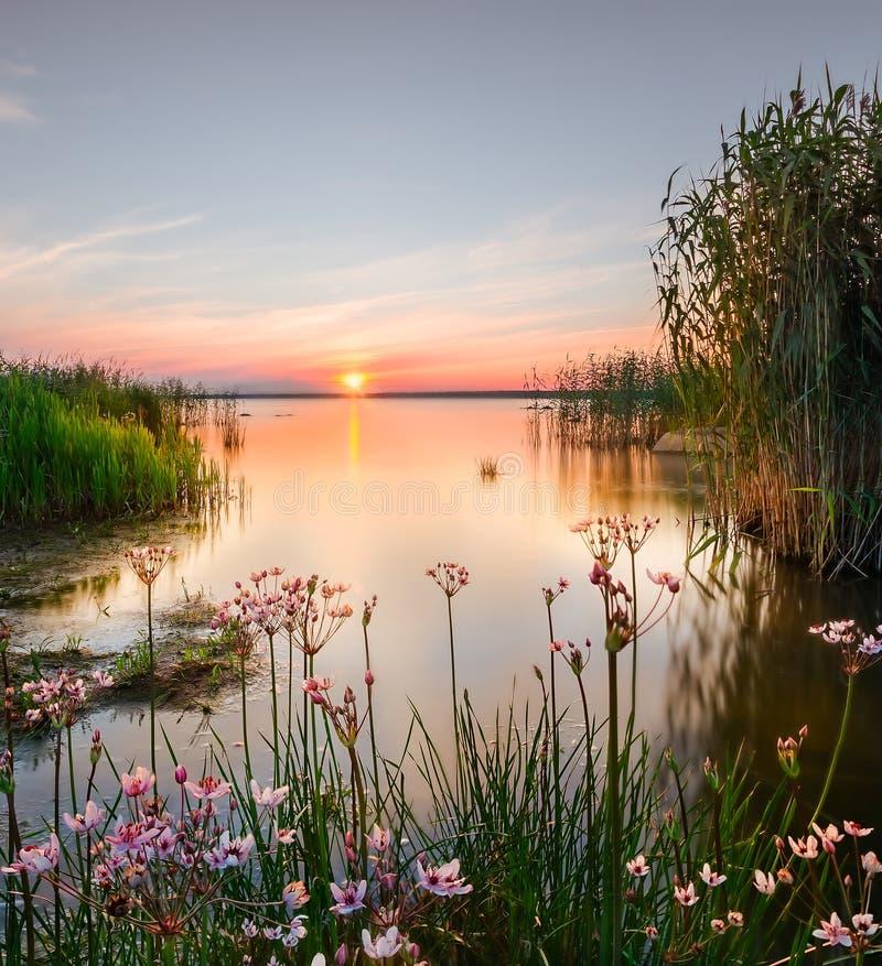 Blumen im Stauwasser lizenzfreie stockbilder