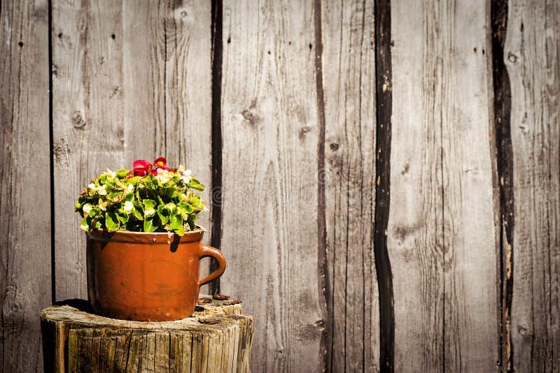 Blumen im Tongefäß stockfoto
