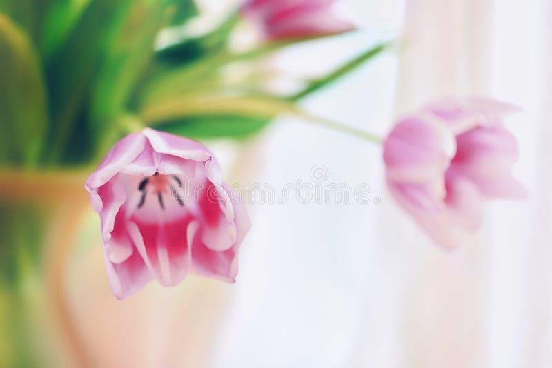 Blumen im Vase stockfoto