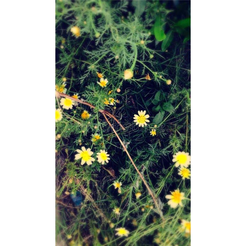 Blumen im Verein 🌸 stockbild