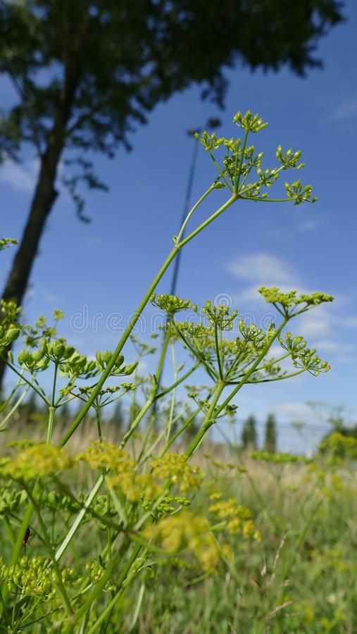 Blumen im Wind stockbilder