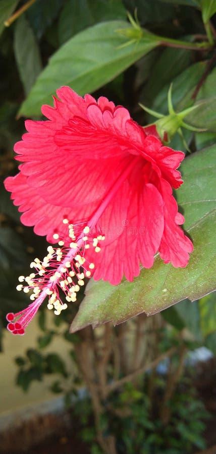 Blumen in Indien Coimbatore stockbild