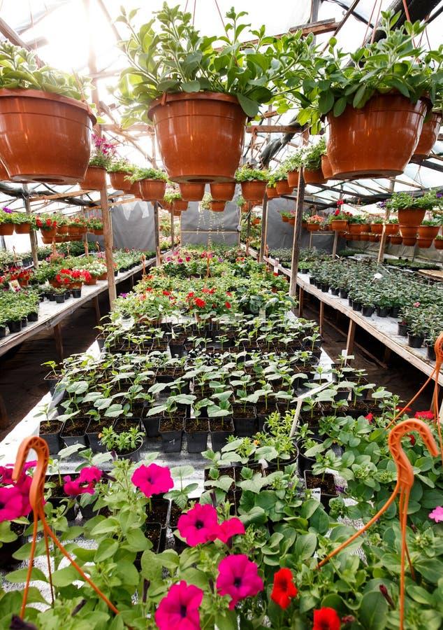 Blumen innerhalb eines Garten-Center-Gewächshauses, Weitwinkelfoto lizenzfreie stockfotografie