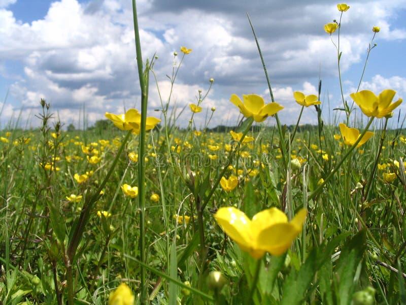 Blumen, Kraut, Wolken stockfoto