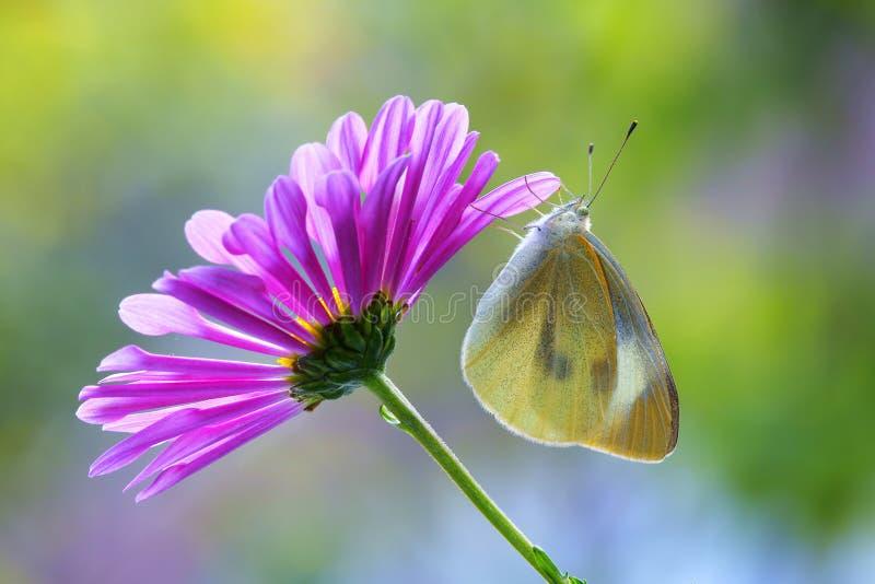 Blumen-Lied stockbild