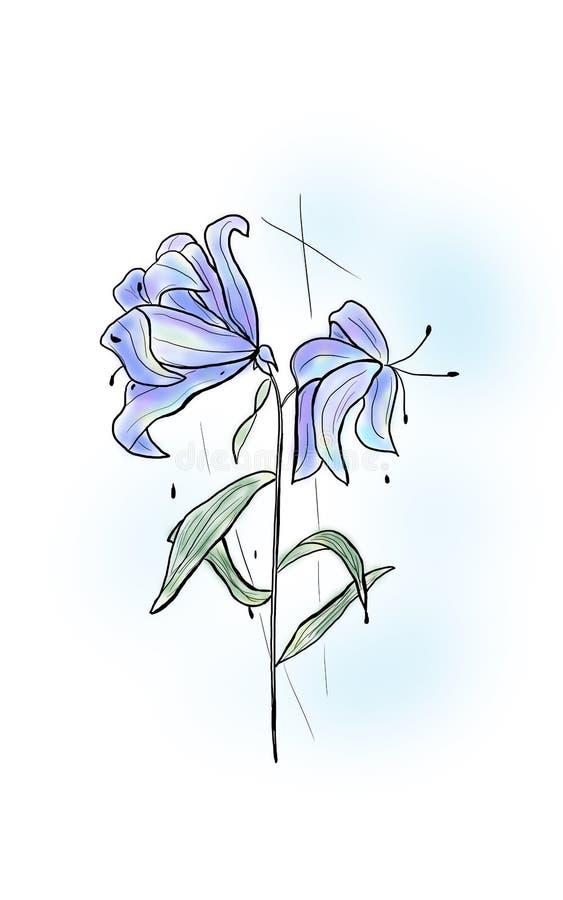 Blumen-Lilie lizenzfreie stockfotos