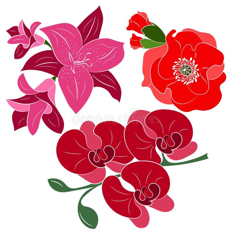 Blumen lokalisiert auf weißem Hintergrund stock abbildung