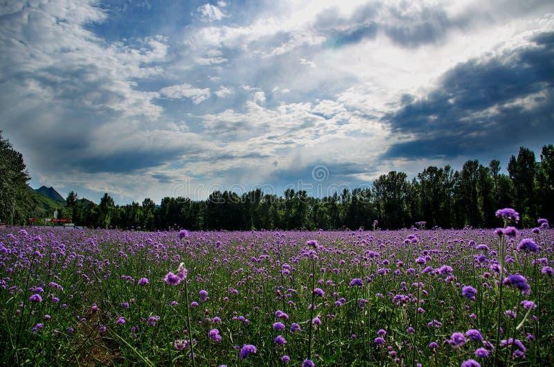 Blumen-Meer stockbild