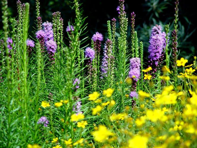 Blumen, Melbourne lizenzfreies stockfoto