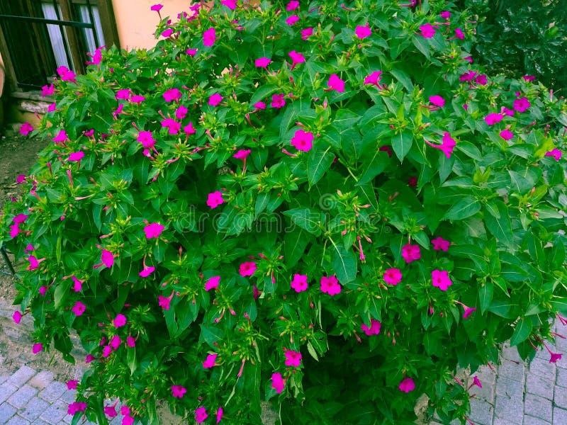 Blumen mit Fenster lizenzfreie stockfotografie