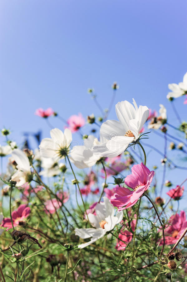 Blumen Mit Lächeln Lizenzfreies Stockbild