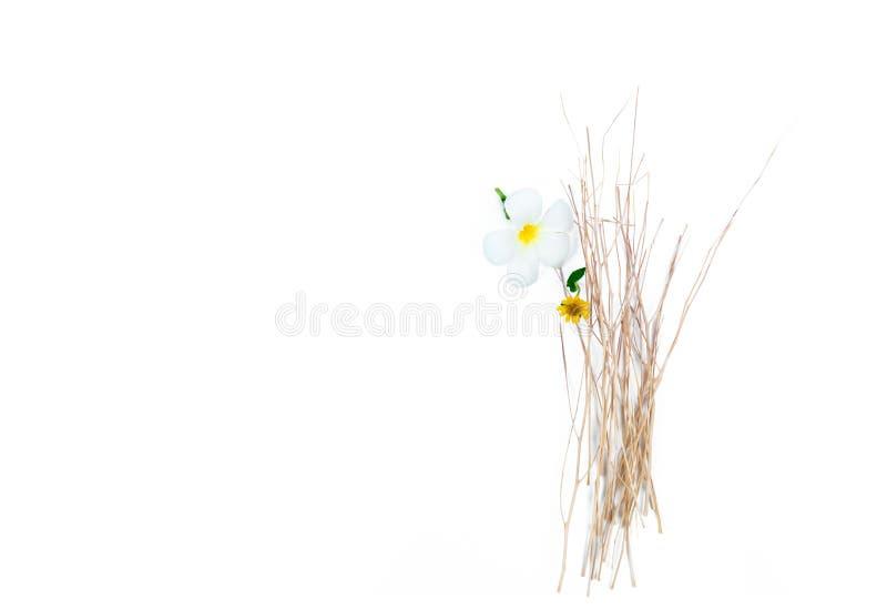 Blumen mit trockener Niederlassung auf weißem Hintergrund Badekurort und Wellnessmitte des Hotels oder des Erholungsortes Hinterg stockfotografie