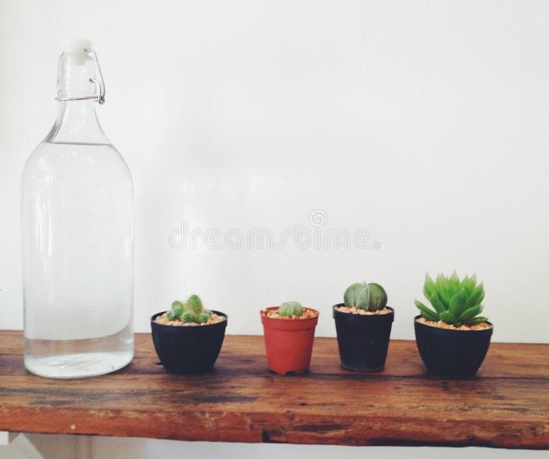 Blumen mit Vase lizenzfreies stockfoto