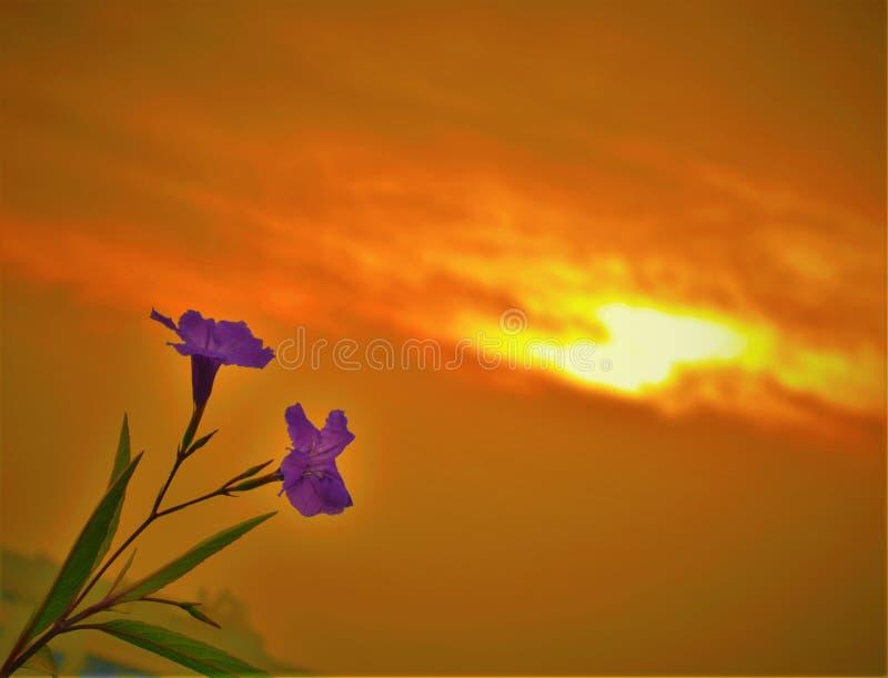 Blumen mit Wurmsonnenuntergang stockfotografie