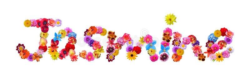 Namen bild blumen mit Blumenarten von