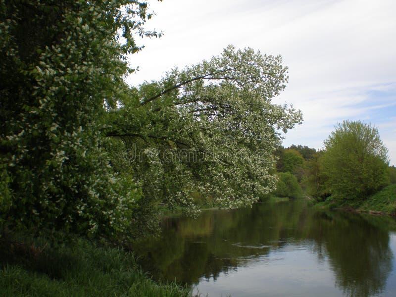 Blumen nave Fluss wohlstand Erfolg Die blühenden Bäume Frühling blühende Gärten im guten Wetter Kirsche lizenzfreie stockfotografie