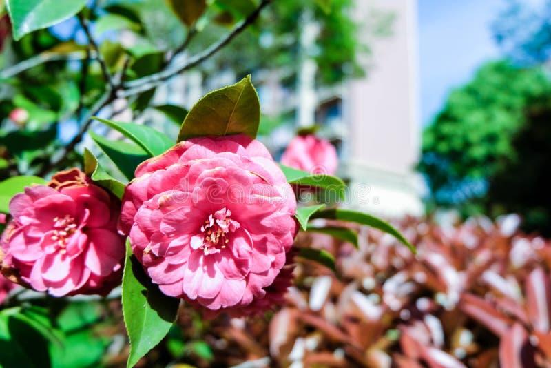 Blumen neben Straße lizenzfreie stockbilder