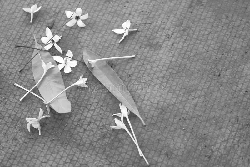 Blumen, Niederlassungen und Blätter fielen unten auf Streifenboden lizenzfreie stockfotos
