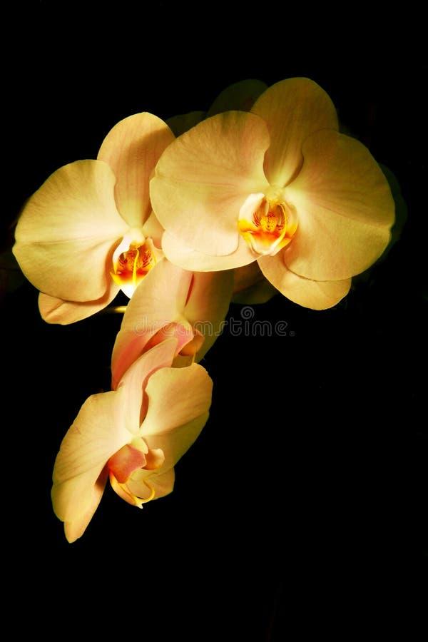 Blumen-Orchidee lizenzfreies stockfoto