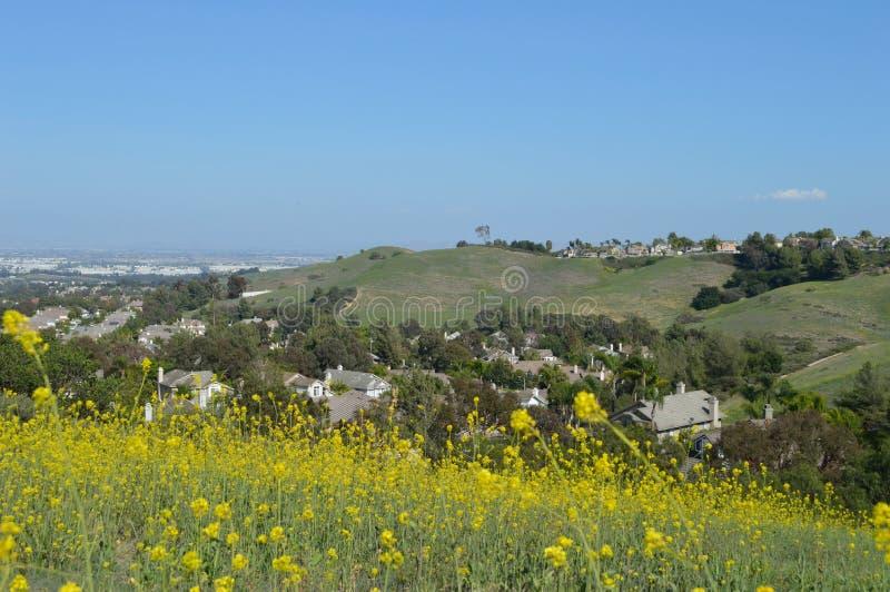 Blumen-Perspektive auf Ridgeline-Häusern lizenzfreies stockbild