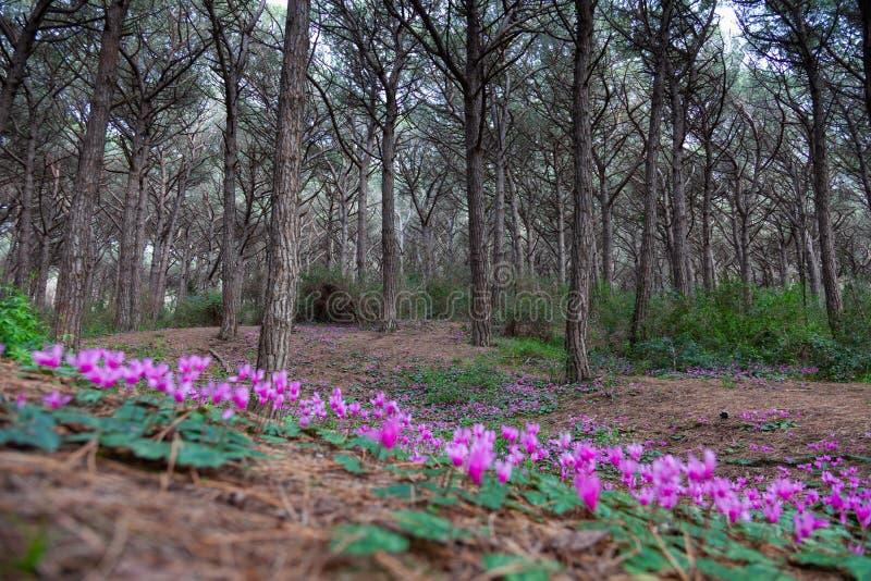 Blumen in Pineta di Cecina, April 2011 stockbild