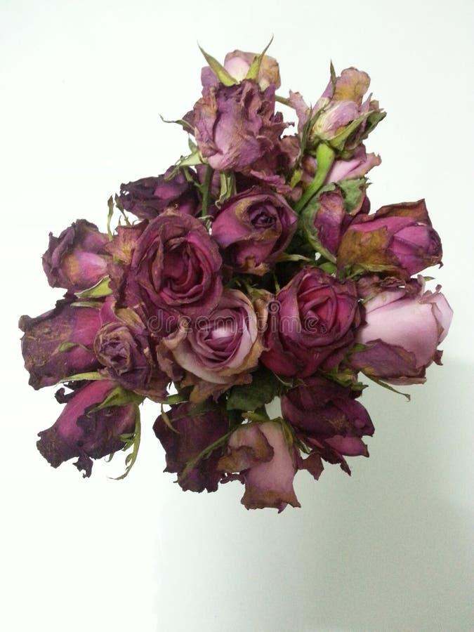 Blumen-Rosen verwelken altes Rot der Liebe stockbilder