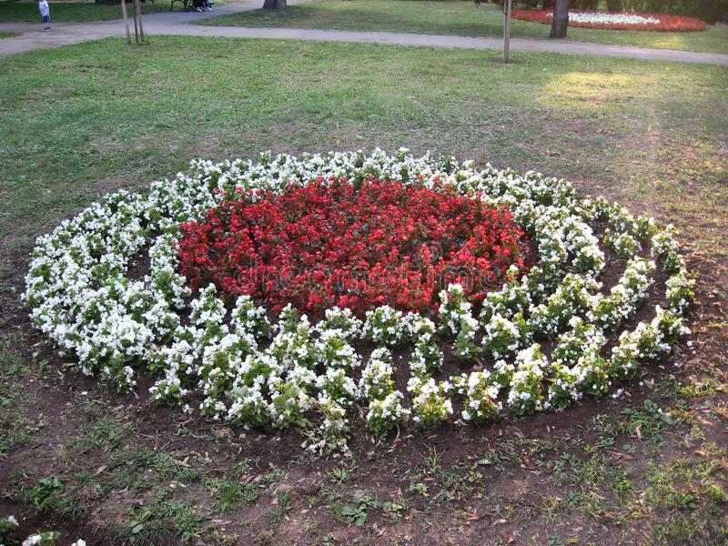 Blumen, Rot, Weiß, Geen, Gras, Park, Weg lizenzfreies stockfoto
