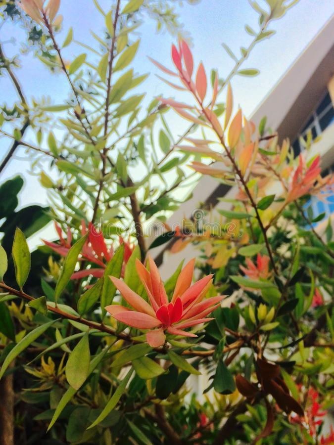 Blumen-Schönheit lizenzfreies stockfoto