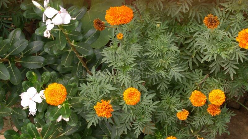 Blumen-Schönheit lizenzfreie stockfotografie