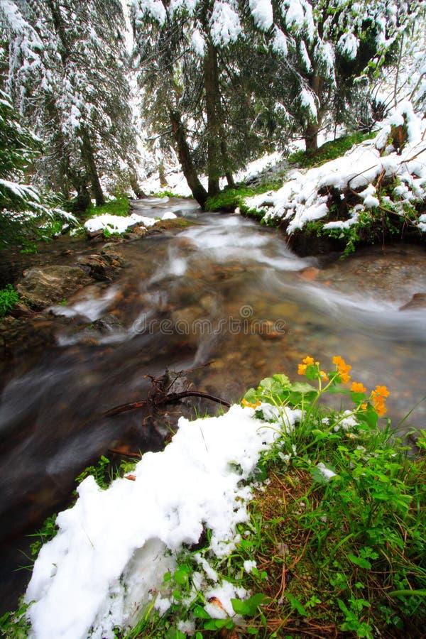 Blumen, Schnee und Fluss stockbild