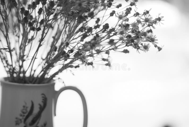 Blumen in Schwarzweiss stockfoto. Bild von weiß, fotographie - 101846828