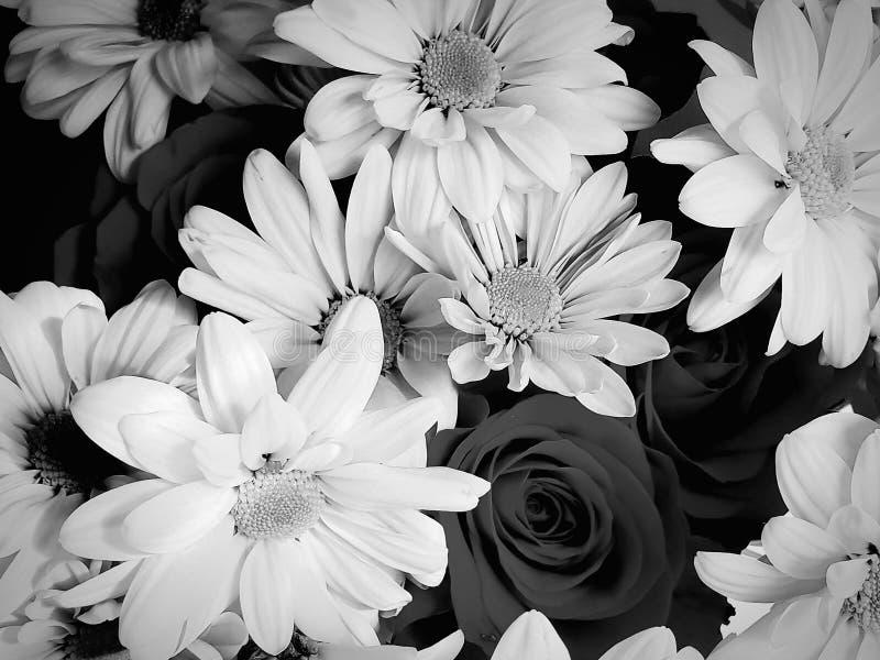 Blumen in Schwarzweiss stockbild