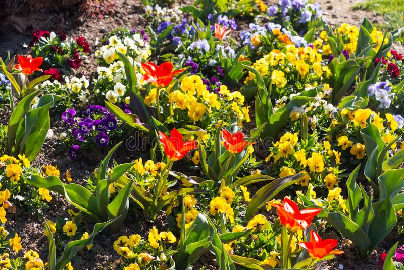 Blumen am See Como stockbilder