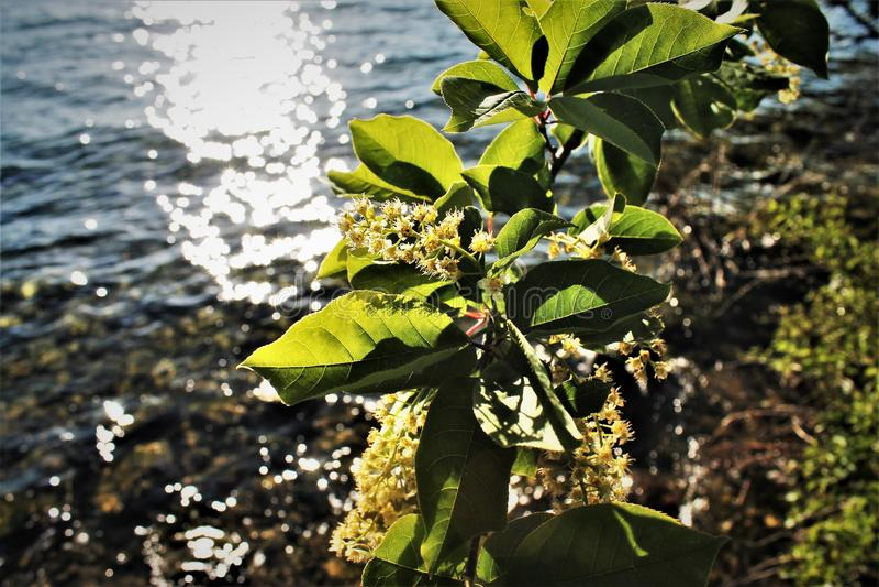 Blumen, Seeufer, Sonnenuntergang lizenzfreie stockfotos
