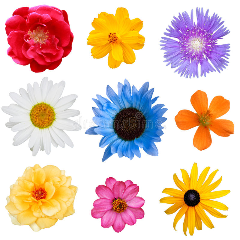 Blumen-Set stockfoto