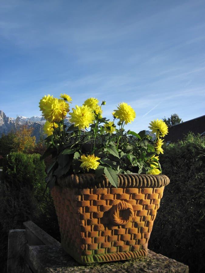Blumen sind in einem keramischen Topf wachsend lizenzfreies stockbild