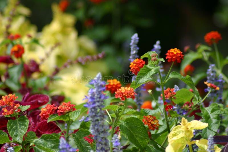 Blumen-Sprenger stockfotos