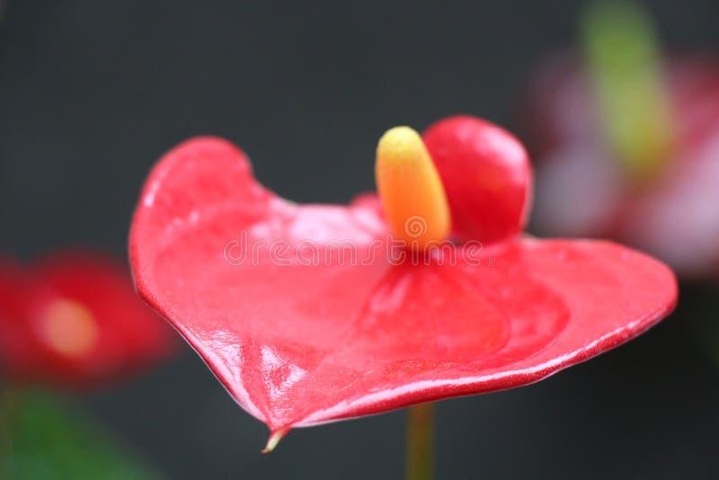 Blumen stellen gegenüber und färben stockbilder